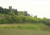 Vineyards among turreted walls: the ancient town of Soave